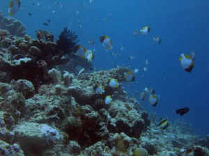 Bunaken Diving Wallpaper 1024 01