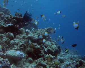 Bunaken Diving Wallpaper 1280 01